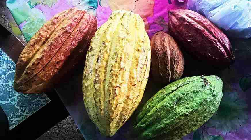 qué hacer en baracoa cuba. sendero del cacao. cocoa trail excursion cuba. cosa fare a baracoa