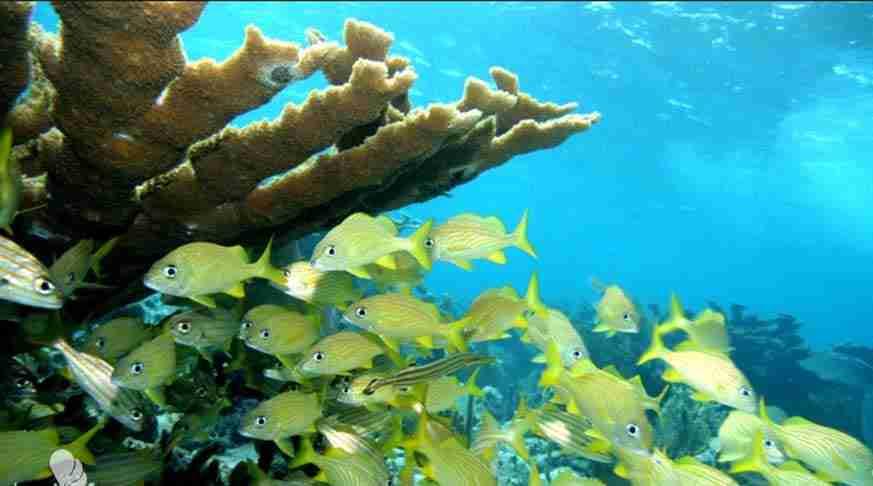 coral tour from camaguey cuba. coralli tour a santa lucia cuba. excursión en playa santa lucia