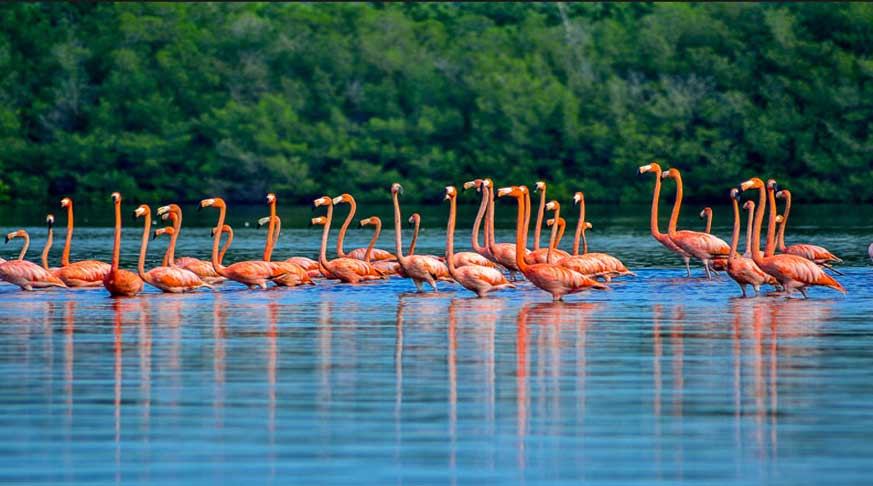 Guanaroca Lagoon in Cienfuegos, there are also natural forests, is the place for see the bird