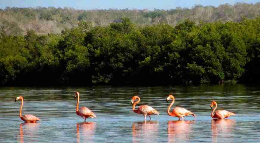 excursión a cuba, laguna de guanaroca. excursiones por cuba. ecotour cuba. ecotour to cuba. tour ecologico cuba. tour ecologico a cuba