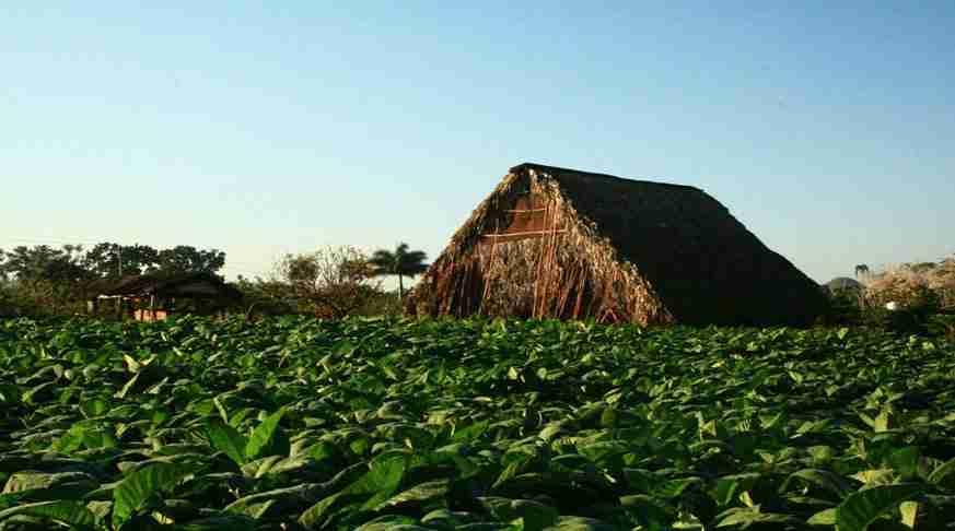 Excursiones desde La Habana. Casa de Tabaco.